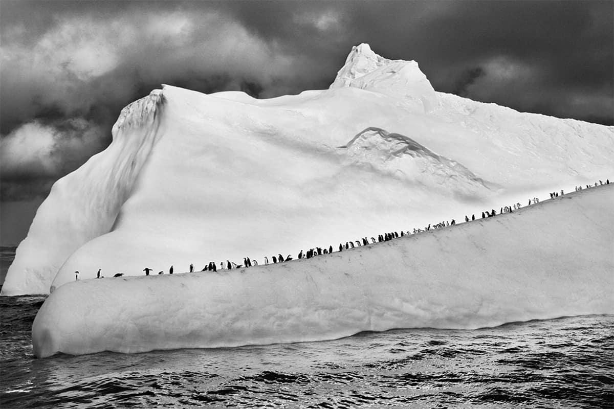 Livro Gênesis Pinguim Antártida Salgado