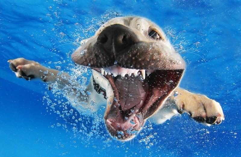 UnderWater Dogs Photos